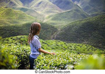 ung kvinna, på, te plantering