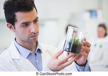 ung, manlig, forskare, tittande vid, ung växt, hos, labb