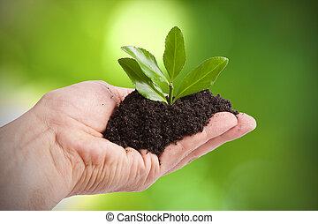 unge, træ, til, plante, af, mand, økologi, og, den, miljø