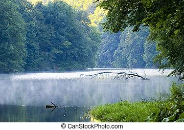 ungern, tropisk, träd, insjö, stilla, vatten, lysande, ...