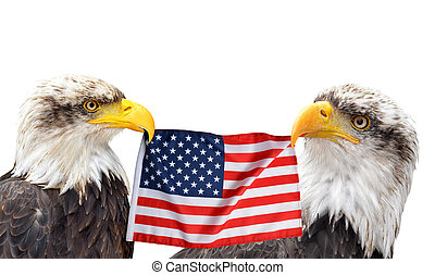 uni, flag., tient, etats, bec, aigles, chauve