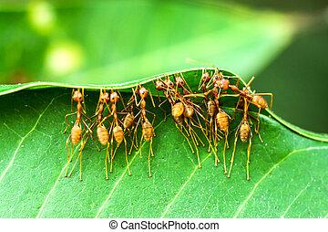 unidade, formigas