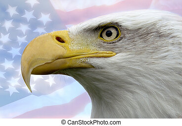 unidas, símbolo, -, estados, patriótico, américa
