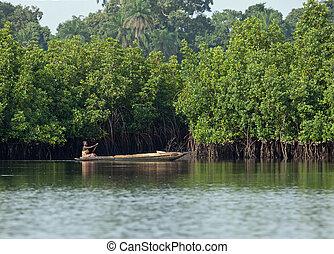 Gambian Woman paddling pirogue - Unidentifiable Gambian ...