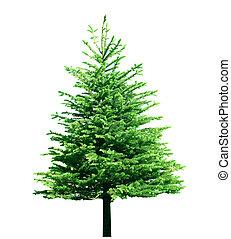 unique, arbre, pin