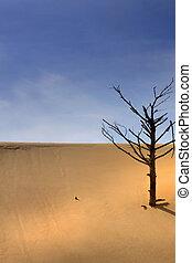 unique, désert, arbre