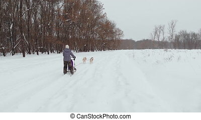 UNIQUE DRONE AERIAL SHOTS, Husky pack running on the snow...