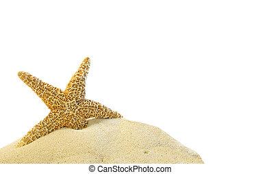 unique, etoile mer, sur, a, sable, colline