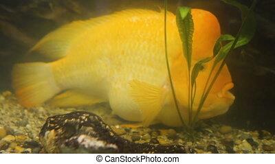 unique, fish, aquarium