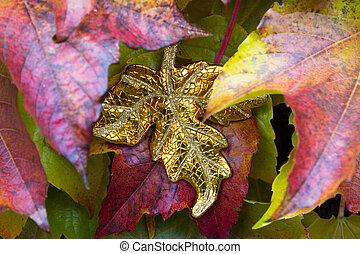 Unique golden leaf between autumn leaves of a suckert,...