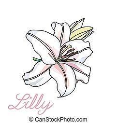 unique, lilly, fleur