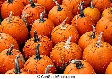 Unique pumpkins at an Ontario farm