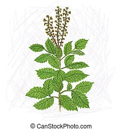 holy basil - unique style illustration of exotic plant holy...