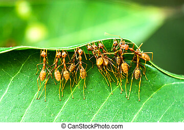 unità, formiche