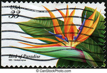 Bird of Paradaise - Strelitzia reginae