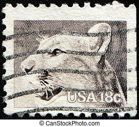 Puma concolor - UNITED STATES OF AMERICA - CIRCA 1981: A ...