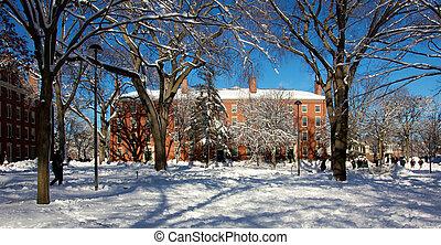 universidade, após, neve, harvard, tempestade, dormitório, campus