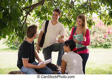universitet, deltagare, möte, och, förberedande, pröva