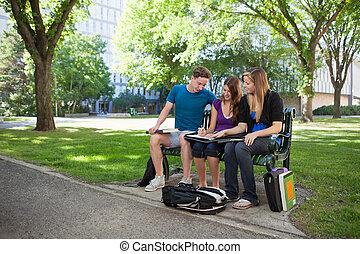 University Students Doing Homework