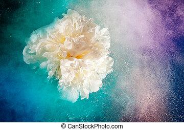universum, lik, blomningen