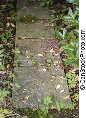 unkräuter, wachsen, in, risse, von, kleingarten, pflastern, platten