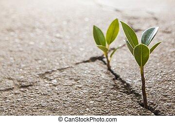 unkraut, wachsen