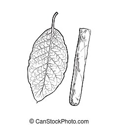 Unlabelled unlit brown Caribbean, Cuban cigar, sketch vector...