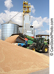 Grain loading on a farm a tractor warehouse