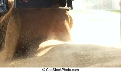 Unloading grain, making a pile. Falling corns out of truck,...