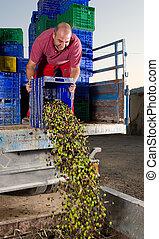 unluading, olives