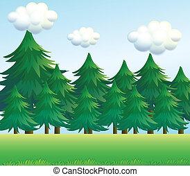 uno, albero pino, scenario