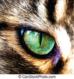uno, esposizione, maine, faccia, vettore, gatto, coon, eye.