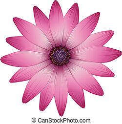uno, fiore, con, rosa, petali