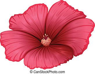 uno, fiore rosso