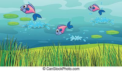 uno, fish, in, uno, fiume, e, uno, bello, paesaggio