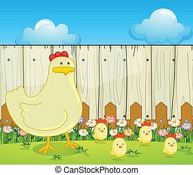 uno, gallina, e, il, quattro, pulcini
