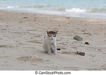 uno, gatto siede, spiaggia
