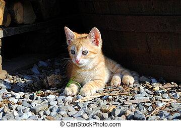 uno, mes, viejo, gatito anaranjado, reclinación encendido, el, suelo