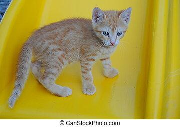 uno, mes, viejo, gatito anaranjado, reclinación encendido, un, silla amarilla