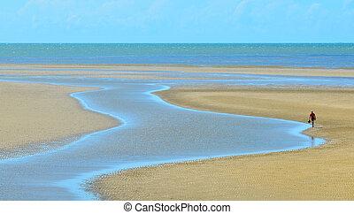 uno, persona, camminare, lungo, uno, flusso, su, uno, selvatico, spiaggia, in, queensland, australia