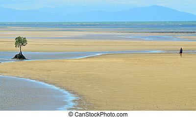 uno, persona, camminare, su, uno, uno, selvatico, spiaggia, in, queensland, australia