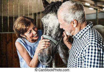 uno, primo piano, di, coppie maggiori, petting, uno, cavallo, in, uno, stable.