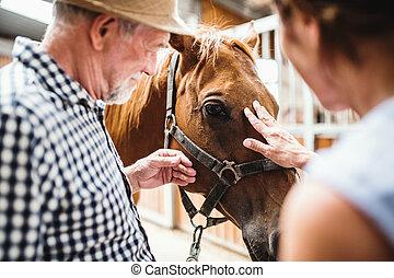 uno, primo piano, di, coppie maggiori, petting, uno, horse.