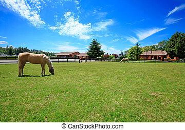uno, ranch cavallo, con, uno, casa, e, fence.