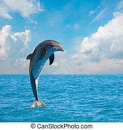 uno, saltare, delfini