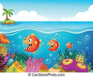 uno, scuola pesce, appresso, il, reefs corallo