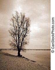 uno, solitario, albero, su, il, banca, di, il, fiume