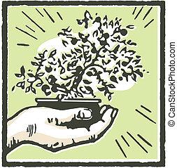 uno, stampa, di, uno, titolo portafoglio mano, uno, albero bonsai