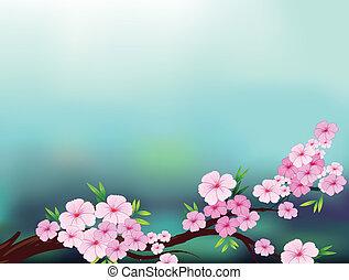 uno, stationery, con, fiore ciliegia, fiori