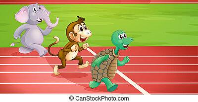 uno, tartaruga, uno, scimmia, e, un, elefante, correndo